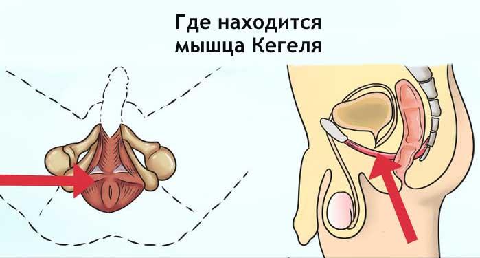 Лк мышца упражнения мужчин